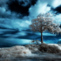 45+ Surreal Infrared photography Inspirations and Tips