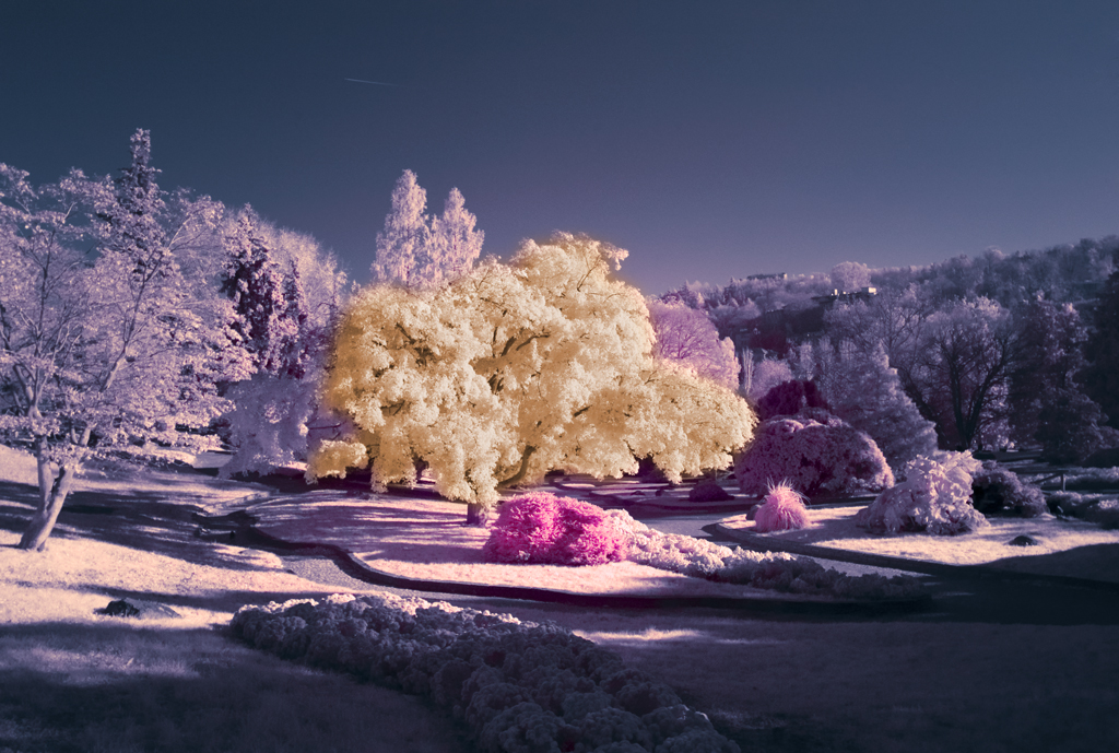 This IR photograph is taken using Cokin 007 (89B) IR Filter with Focal Length: 18mm