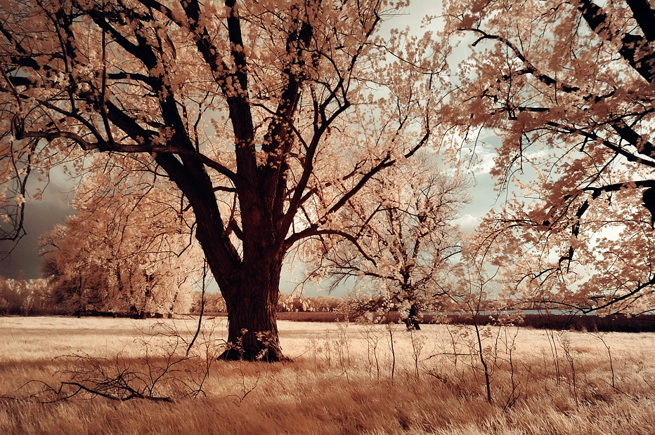 Infrared Photography taken with Hoya R72 IR filter and Lens used is the Nikkor 17-35mm 2.8