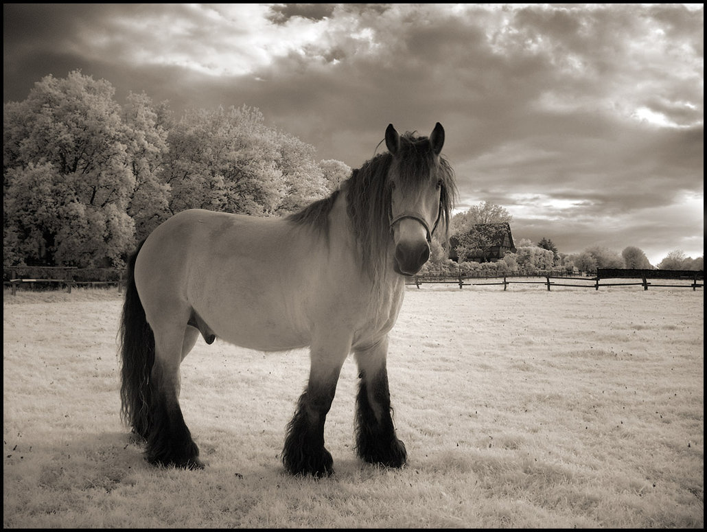The Horse infrared taken with Hoya R72 infrared filter