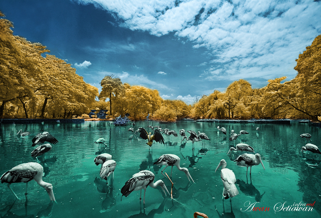 Malaysia National Zoo Infrared Photography