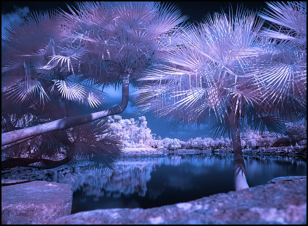 Infrared Photography : Nong Nooch tropical Garden
