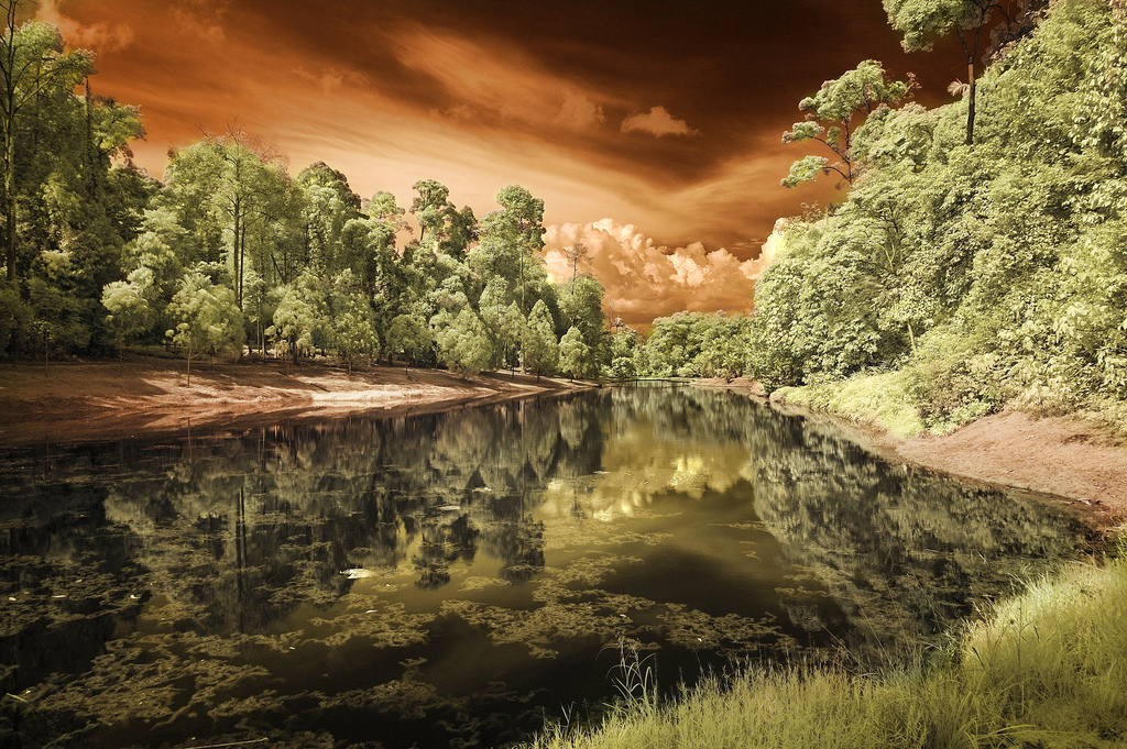 Silent Lake Bukit Cahaya, Shah Alam - Infrared Photography