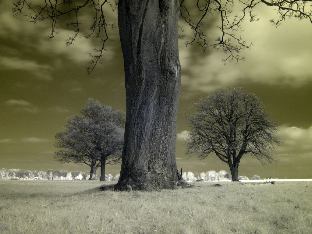 Infrared Photography taken using Canon PowerShot A640