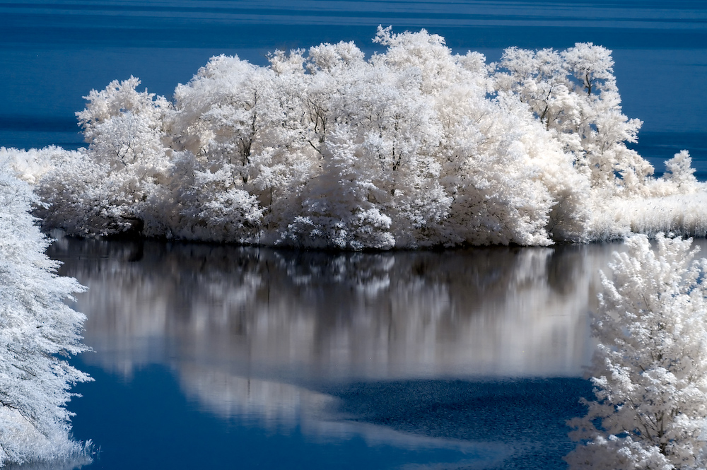 Tree Reflections infrared photography taken by John Brian Silverio