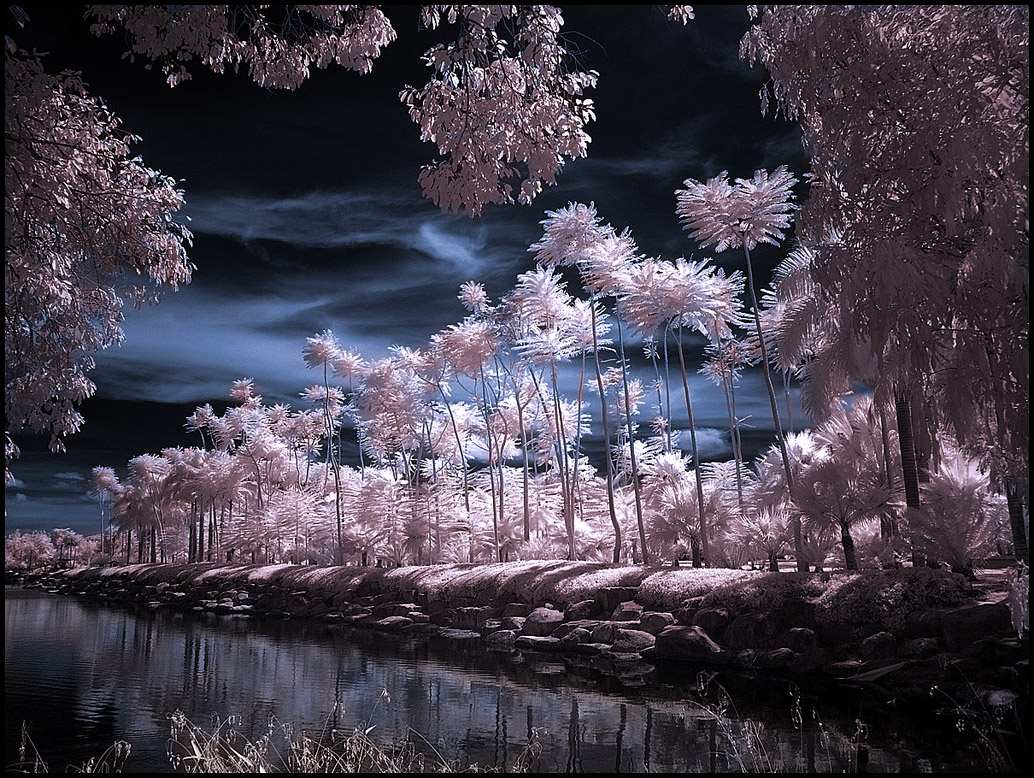 Infrared photography - Nong Nooch Tropical Botanical Garden