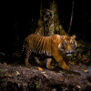 Notable Tips for shooting Awesome Wildlife photographs